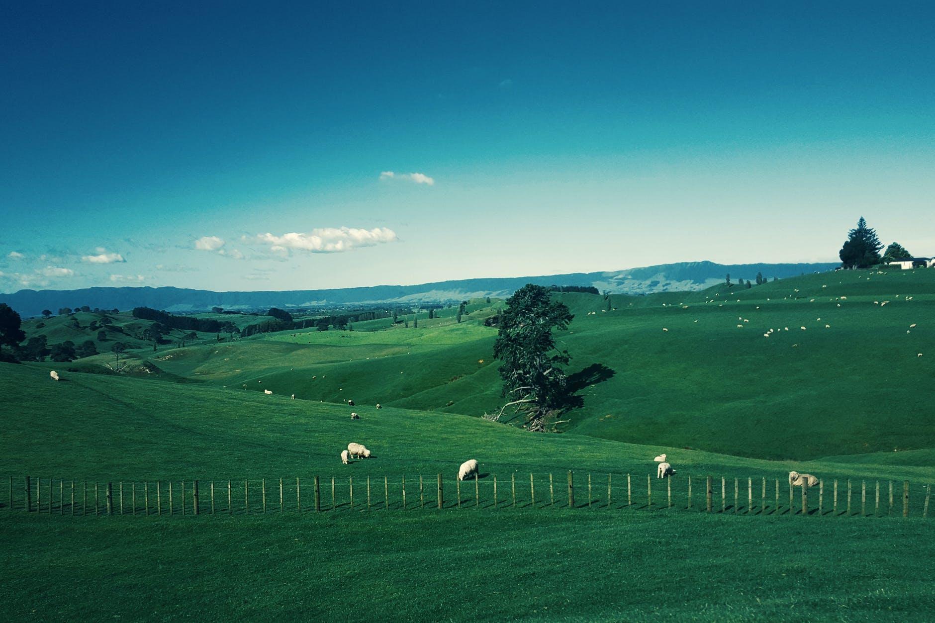 Our last stop: Dunedin, New Zealand